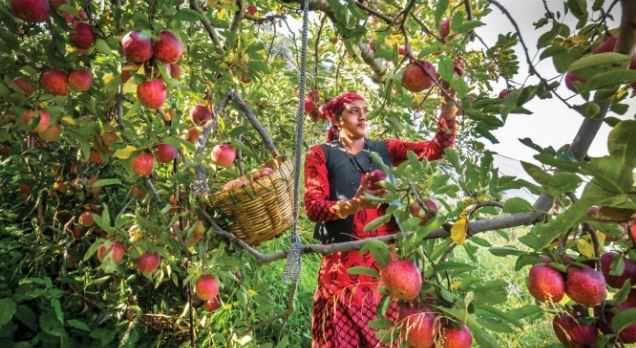 सेब उत्तराखण्ड का ब्रांडिंग हिमाचल की