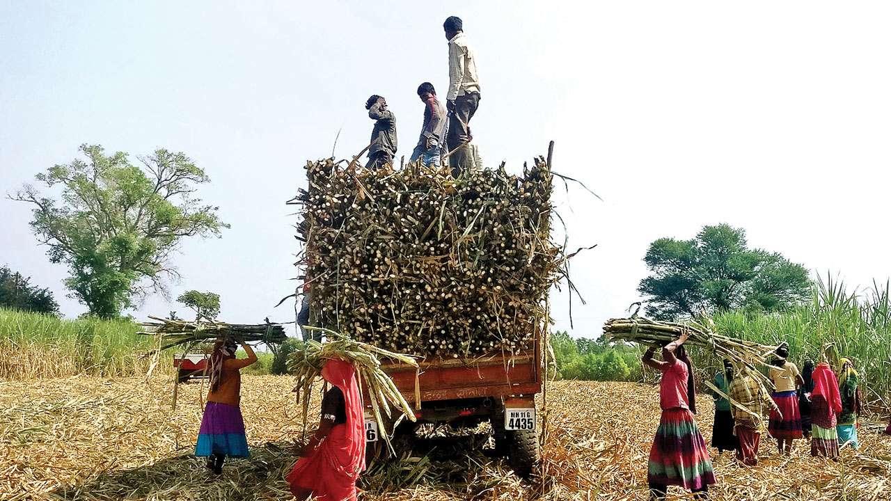 योगी सरकार के नए फरमान ने बढ़ाया लाखों गन्ना किसानों की मुसीबत, विपक्ष हुआ हमलावर