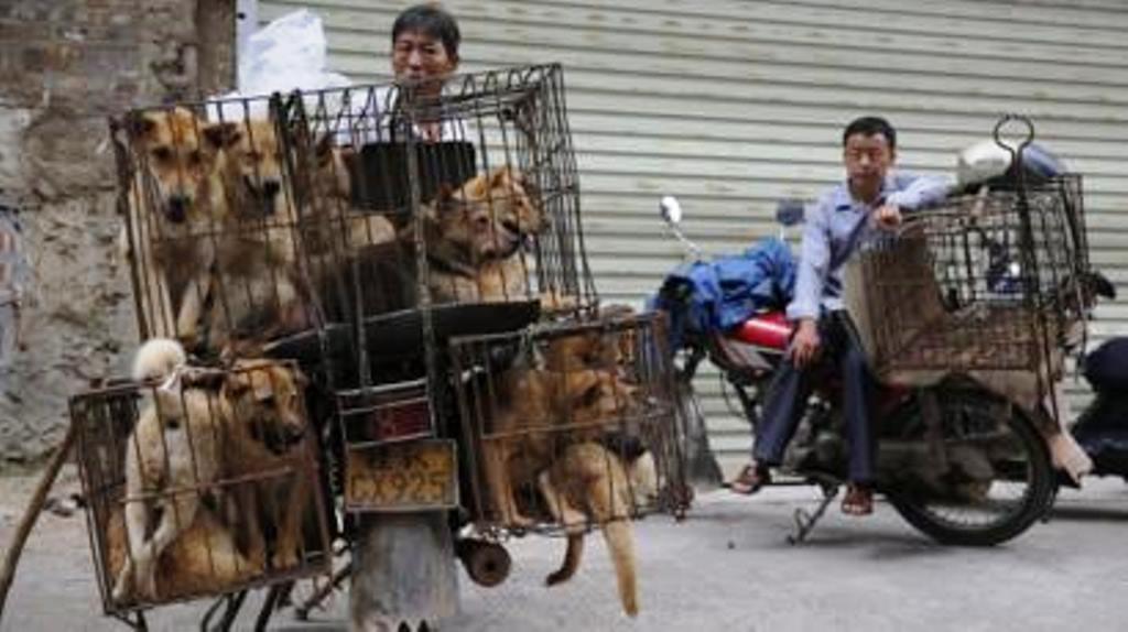 चीन के वुहान शहर में फिर खुला जिंदा जानवरों का बाजार