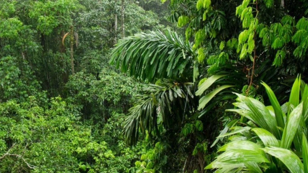 वैज्ञानिकों की चेतावनी, अमेजन वर्षावनों की अंधाधुंध कटाई से आएगी नई महामारी