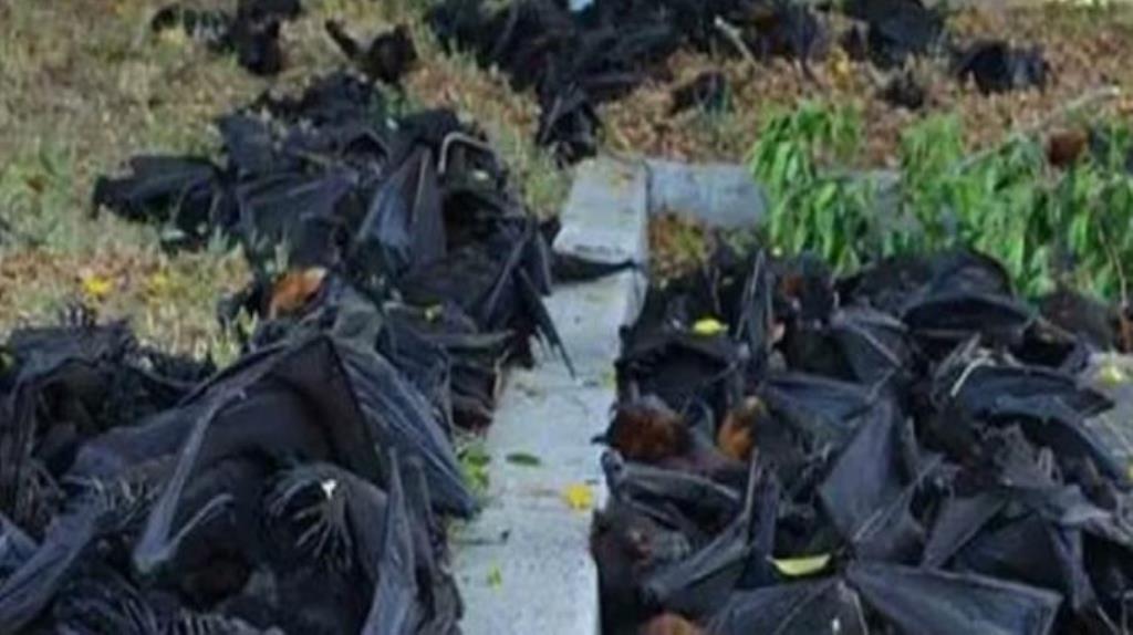 गोरखपुर में रहस्यमयी तरीके से मृत मिले 500 से अधिक चमगादड़, इलाके में सनसनी